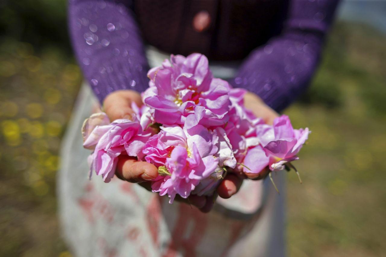 Mains tenant des pétales de roses