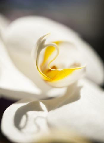 La fleur, l'inspiration des Parfums Nout Pure Blance